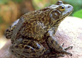 1. 개구리
