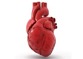 2. 심장