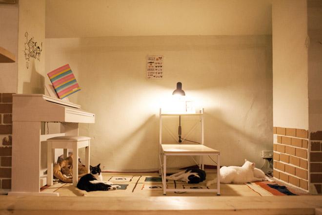 유기묘 고양이카페 '지구정복을 꿈꾸는 고양이'