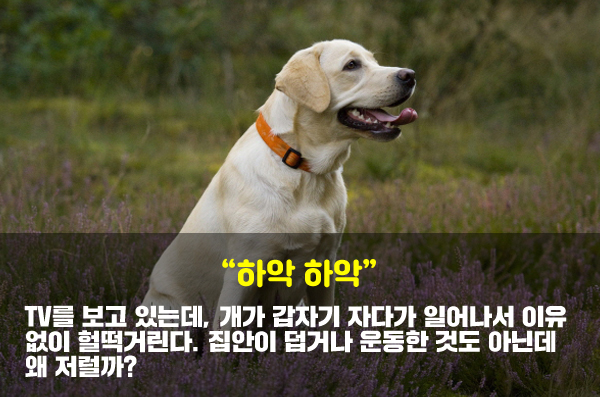개가 헐떡거리는 이유로 가장 적절한 것은?