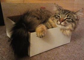 1) 상자