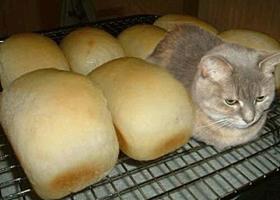 1) 식빵
